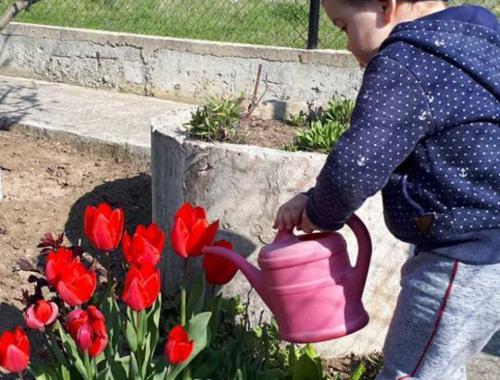 Урок за частите на цветето